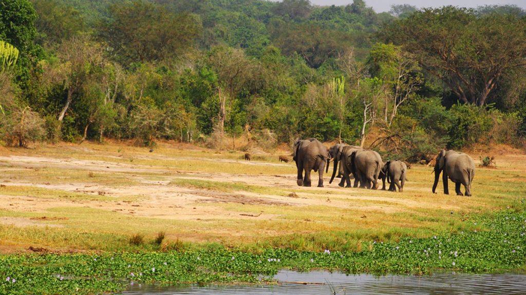 Uganda safari in queen eleizabeth np